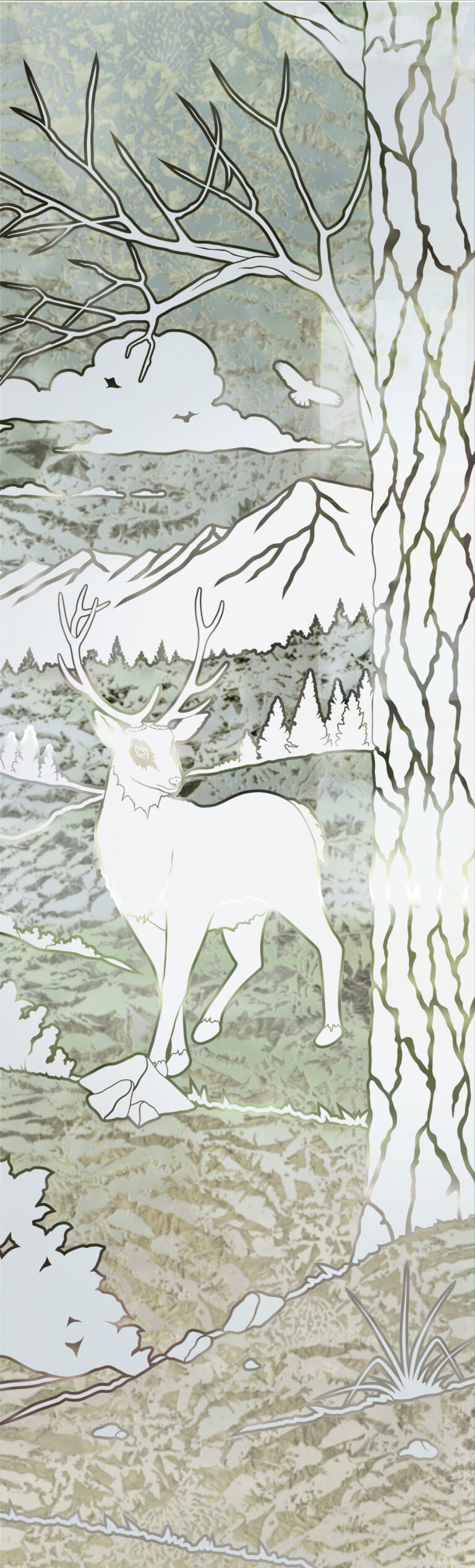 Wandering White Tail
